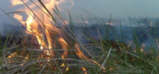 About Fire in the Pasture This website is maintained by Tyler Chadwick, poet, literary critic, and editor of Fire in the Pasture: Twenty-first Century Mormon Poets. (Excuse the following abrupt slip into the first-person.) It began as a project I...